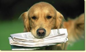 newspaper-dog