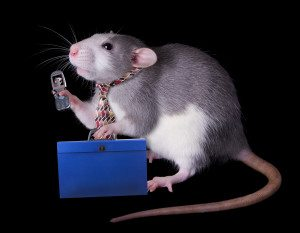 Ratting Out